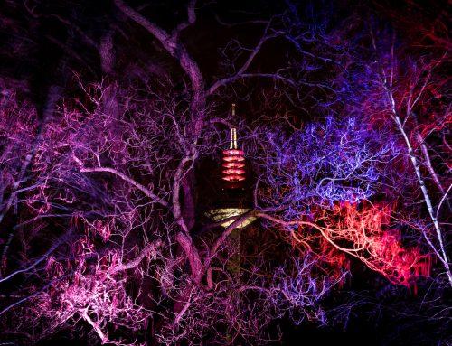Winterlichter im Palmengarten vom 07.12.2019 – 08.01.2020